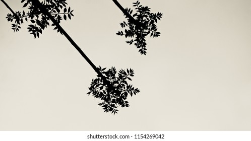 Beautiful tree leaves with white background unique photo