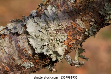 Beautiful Tree Lichen Plants