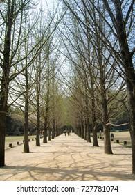 Beautiful tree lined roads at Namiseom Island, Korea