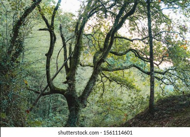 Beautiful tree in a lush forest