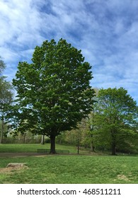 A beautiful tree in a meadow with blue sky.