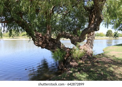 beautiful tree / Nature's bench