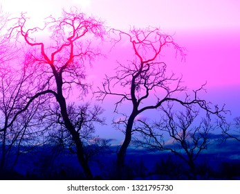 A beautiful tree on the background of an abstract sky photographed close-up