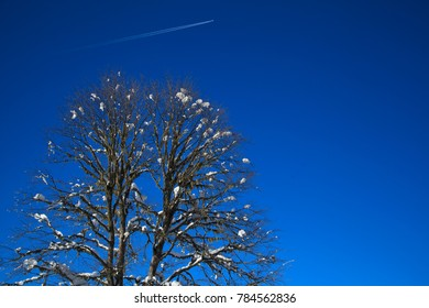 a beautiful tree on the branches lies the snow, against the blue sky