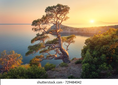 Beautiful tree on the mountain at sunset. Colorful landscape with old tree with green leaves, blue sea, rocks and yellow sunlight in dusk. Summer forest. Travel in Crimea. Nature background. Scenery