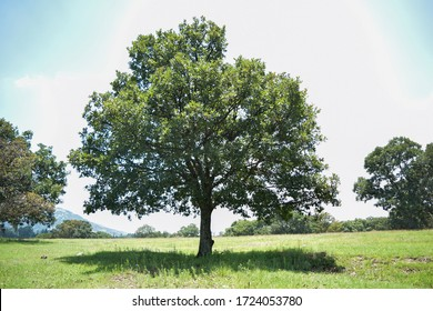 Beautiful tree on a sunny day in the field