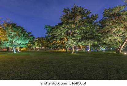 Beautiful tree in the park at night