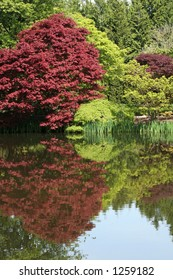 beautiful tree and pond