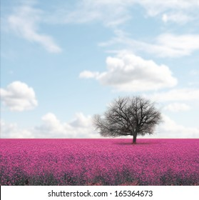 a beautiful tree in a pretty field