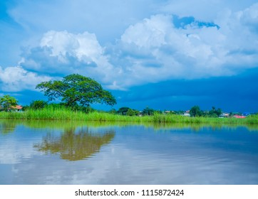 Beautiful tree at the rice field.