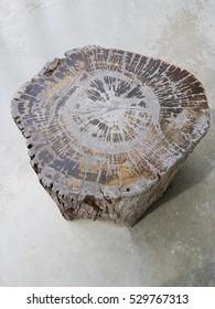 The beautiful tree stump