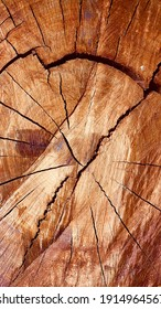 Beautiful tree texture. Abstract wooden texture