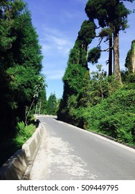 Beautiful Tree Through Road of North India