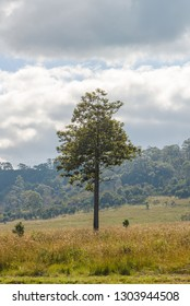 Beautiful Tree in Thung Salaeng Luang National Park, Savanna in National Park of Thailand