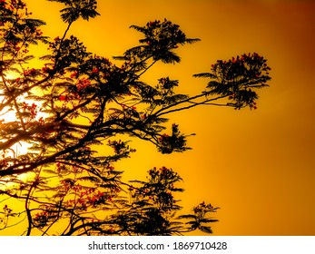 Beautiful tree at the time of sunset with goldenyellow shade in photo