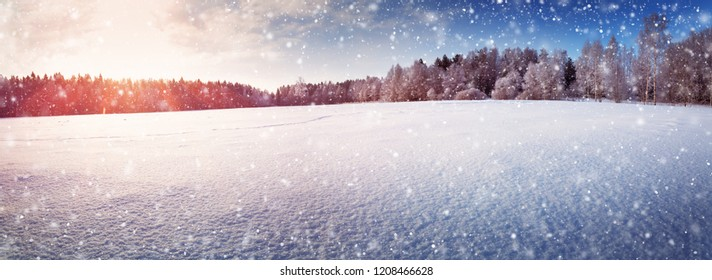 Winter nature backgrounds Horse Beautiful Tree In Winter Landscape In Late Evening In Snowfall Shutterstock Winter Natural Backgrounds Stock Photos Images Photography