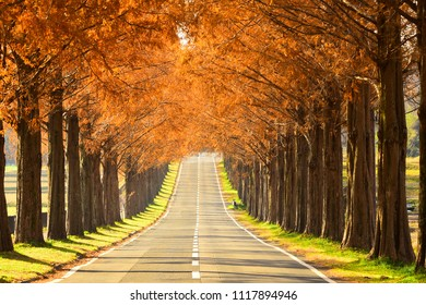 Beautiful Tree-lined Road