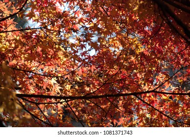 Beautiful trees in the autumn, fall