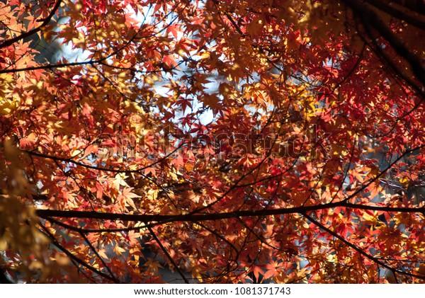 Beautiful trees in the autumn, fall