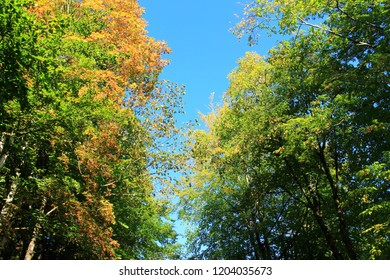 Beautiful trees with autumnal foliage, blue sky above