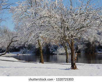 Beautiful trees with branches covered with ice and snow by the pond