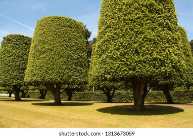 Beautiful trees at Colleville-sur-Mer cemetery with well cut grass. Normandy, France.