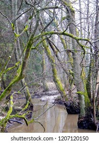 Beautiful trees covered with green moss groving above the wild river, Masuria, Poland