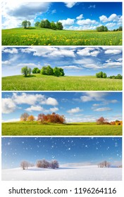 Beautiful trees in four seasons landscape on the field. Spring, summer, autumn and winter collage