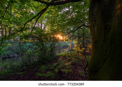 Beautiful trees in Het Amsterdamse Bos, The Amsterdam Forest, Amsterdam, the Netherlands during sunrise.