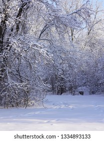 Beautiful trees with hoarfrost after snowfall in winter