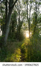 Beautiful trees leaves and foliage, lit by magical dusk sunlight at twilight, along narrow pathway