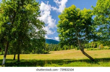 Beautiful trees in the mountains. Green grass and hot sun. Summer season
