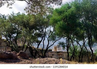 Beautiful trees on the way to Acropolis - Greece