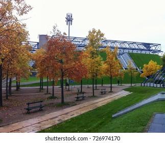 Beautiful trees in Paris, France