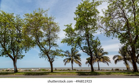 Beautiful trees planted along side the shores of Maputo Bay in Maputo, Mozambique