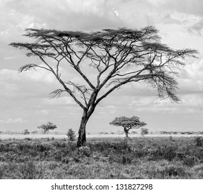 Black And White Tree Images Stock Photos Vectors Shutterstock