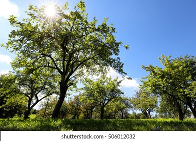 Beautiful trees in the sun