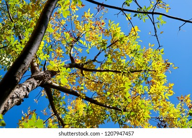 Beautiful trees in the Zhongguancun Forest Park in Beijing in autumn