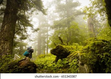 Beautiful Trek in Uttarakhand called Valley of Flowers in Himalayas, Nanda Devi biosphere national park, amazing landscape, mountains, hills, foggy, misty, rain, monsoons, colorful flowers, wallpaper