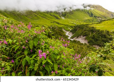 Beautiful Trek in Uttarakhand called Valley of Flowers in Himalayas, Nanda Devi biosphere national park, amazing landscape, mountains, hills, foggy, misty, rain, monsoons, colorful flowers, wallpaper