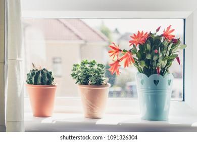 Beautiful, trendy succulents close up shots