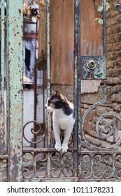 Beautiful tri-colored Cat in Tbilisi, Georgia