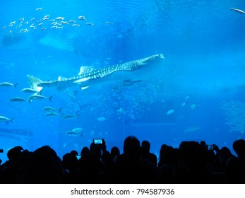 Beautiful tropical Aquarium fish in Japan with various types of fish and people traveling in Japan, Okinawa prefecture.
