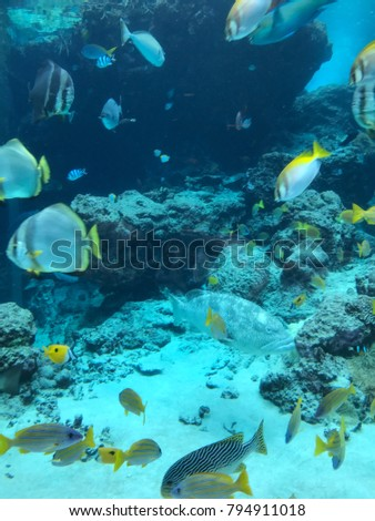 Beautiful Tropical Aquarium Fish Japan Various Stock Photo Edit Now