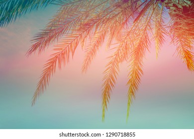 Beautiful tropical background. Dangling palm tree leaves on blue sky sunset background. Trendy color combination teal pink orange . Toned. Summer beach vacation travel relaxation