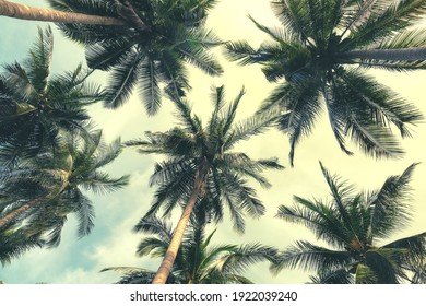 Beautiful tropical beach with coconut palm trees background. Coconut palm trees and cloud over blue sky in vintage tone. Summer vacation background concept.