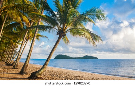 A beautiful tropical beach with palm trees at sunrise in northern Australia