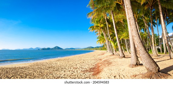 A beautiful tropical beach with palm trees at sunrise in northern tropical Australia