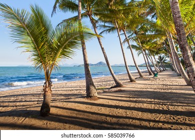 A beautiful tropical beach with palm trees at sunrise in northern Australia, cairns, Queensland.