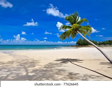 Beautiful tropical beach with palm trees on white sand under blue sky